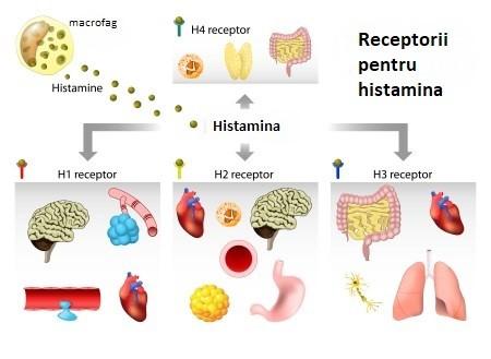 rol histamina