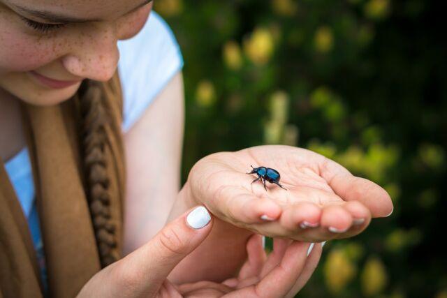 intepaturi insecte