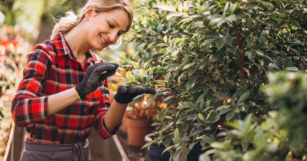 eczema frunze