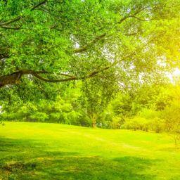 sezonul polenurilor