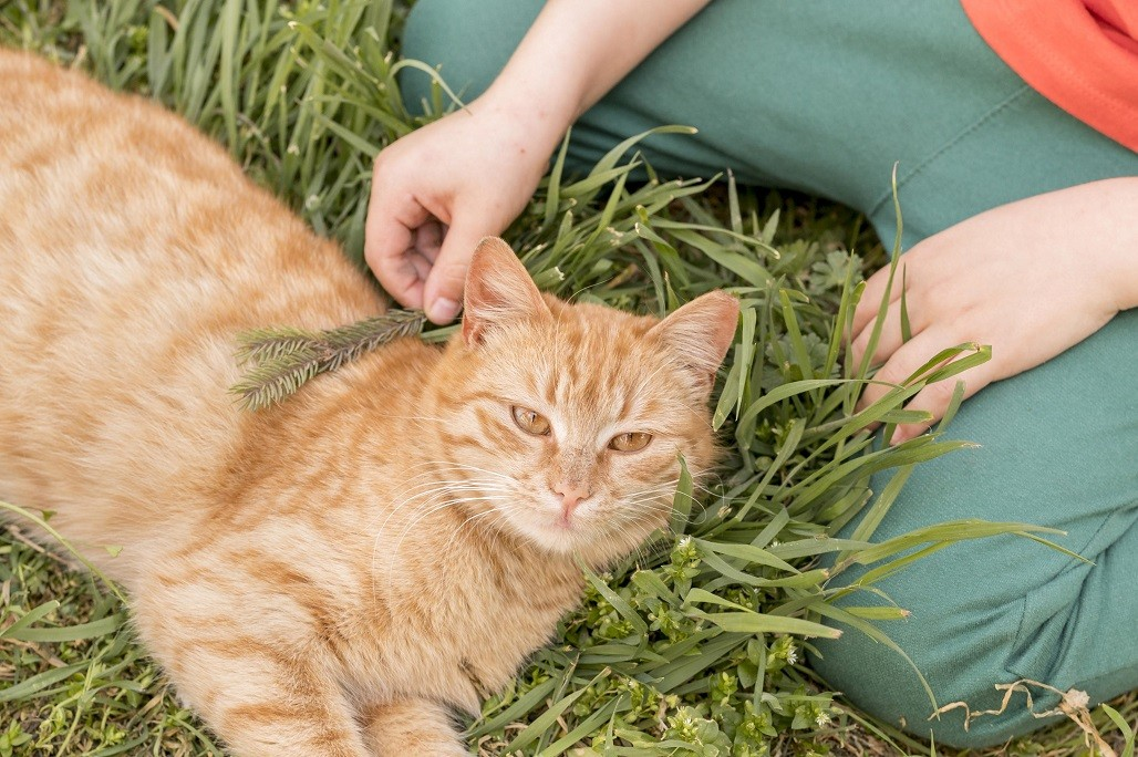 alergia la pisica